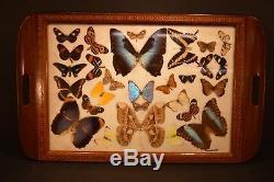 Rio De Janeiro Morpho Papillon 25 X 15 Plateau Inlaid Teck Excellent Etat